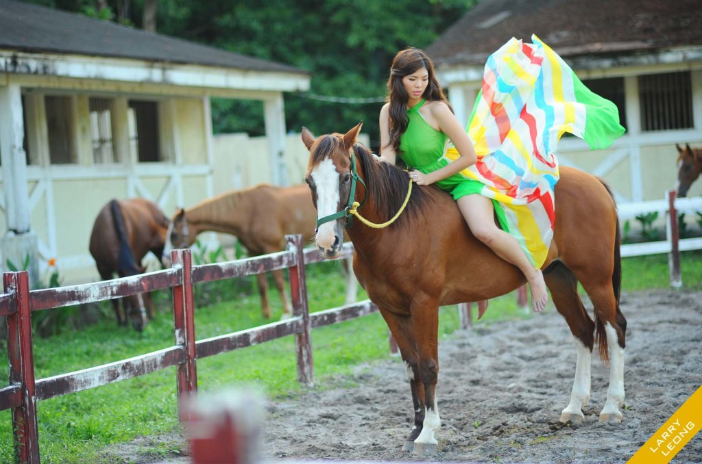 debut_predebut_horse_safari_wild
