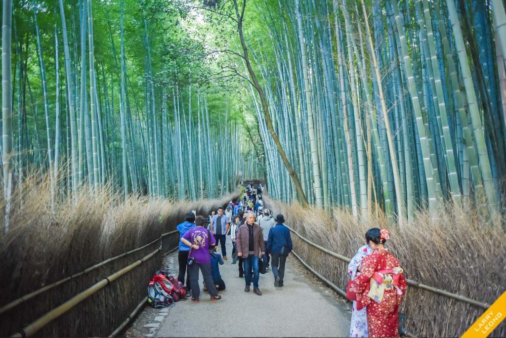 japan_bamboo